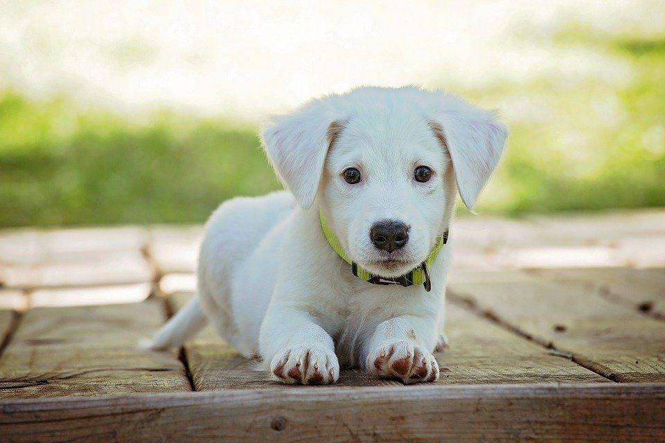 Plastic Small Dog Houses - Post Thumbnail